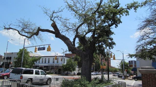 130323000225-auburn-toomers-corner-tree-story-top